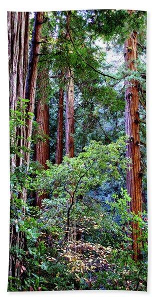 Samuel Taylor Redwoods 1 Hand Towel