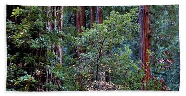 Samuel Taylor Redwoods 2 Hand Towel
