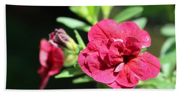 Scarlet Geranium In Cape May Hand Towel