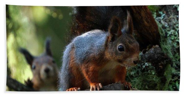 Squirrels Hand Towel
