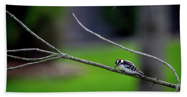 The Downey Woodpecker Bath Towel