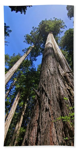 Towering Redwoods Hand Towel