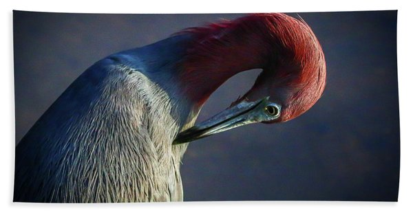 Bath Towel featuring the photograph Tricolor Preening by Tom Claud