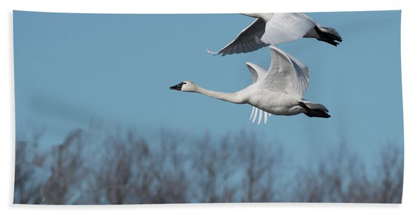 Tundra Swan Duo Bath Towel