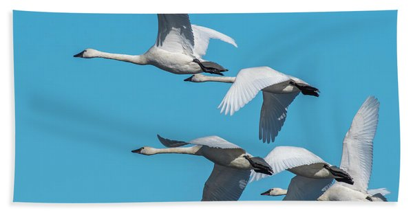 Tundra Swans In Flight Bath Towel