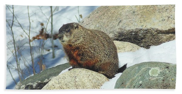 Winter Groundhog Bath Towel