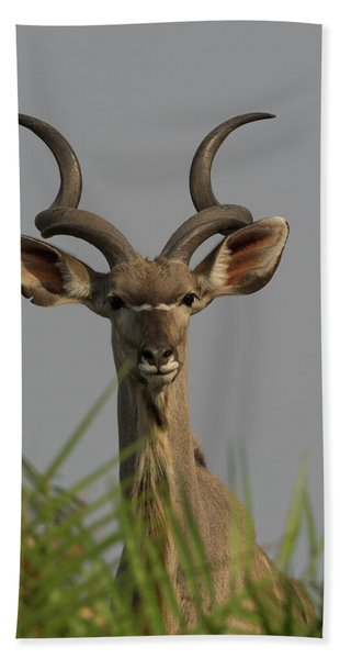 Close-up Of A Greater Kudu Tragelaphus Beach Towel