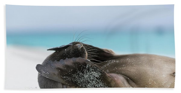 Galapagos Sea Lion Pup Covering Face Beach Towel