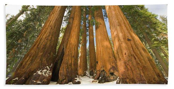 Giant Sequoias Sequoia N P Beach Towel