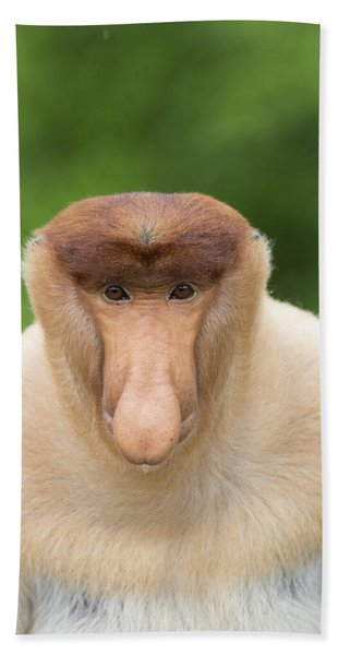 Proboscis Monkey Dominant Male Sabah Beach Towel