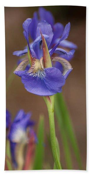 Purple Bearded Iris Beach Towel
