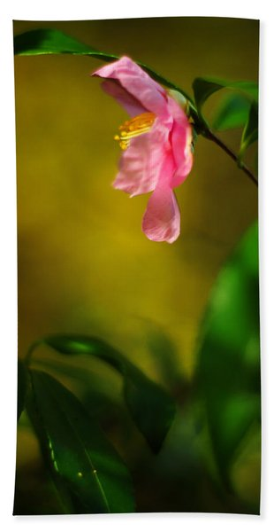A Golden Day Portrait Of A Pink Camellia Beach Towel