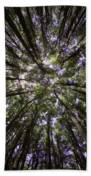 A Low Angle View Of Eucalyptus Trees Beach Towel
