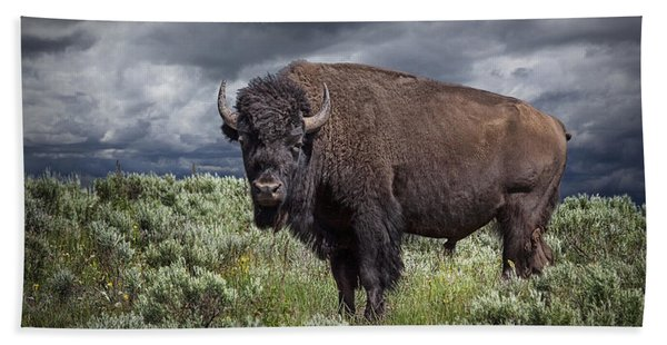 American Buffalo Or Bison In Yellowstone Beach Sheet