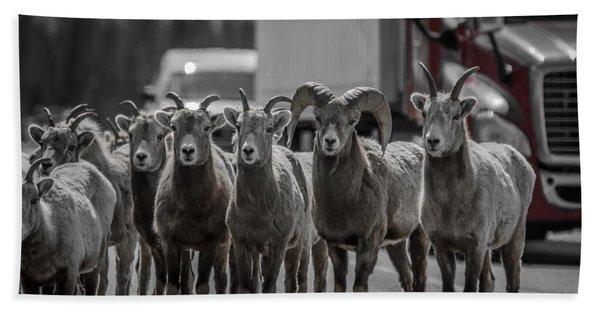 Big Horn Sheep Road Block Beach Towel