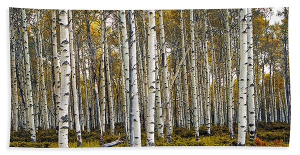 Aspen Trees In Autumn Beach Sheet