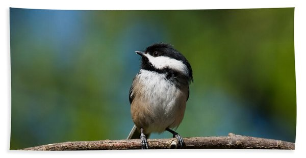 Black Capped Chickadee Perched On A Branch Beach Sheet
