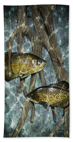 Black Crappies A Fish Image No 0143 Blue Version Beach Sheet