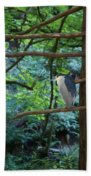 Black-crowned Night Heron Beach Towel