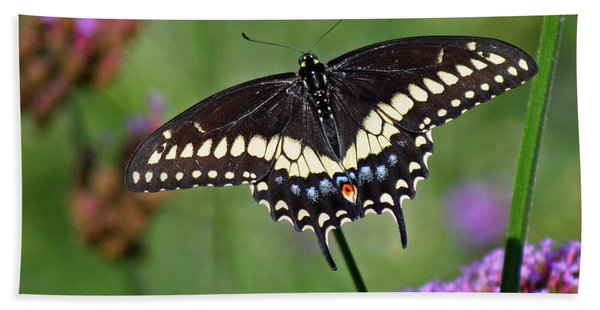 Black Swallowtail Butterfly  Beach Sheet