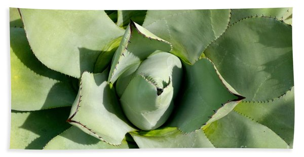 Beach Towel featuring the photograph Blue Agave by Jacqueline Athmann