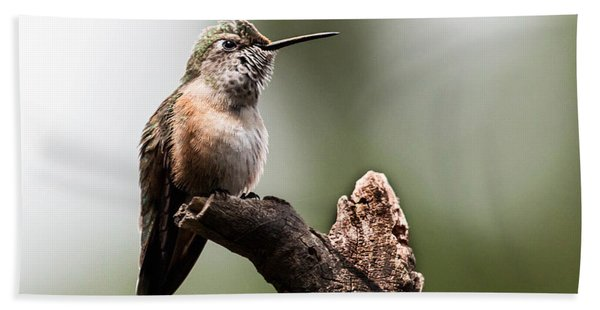 Broad-tailed Hummingbird Sit  Beach Towel