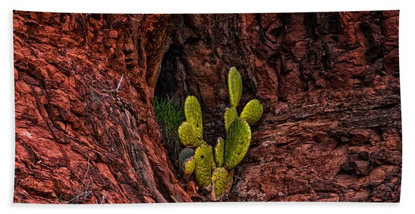 Cactus Dwelling Beach Towel