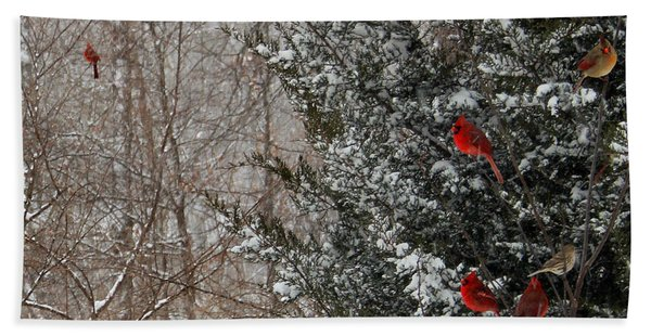 Cardinals In Winter 1 Square Beach Towel