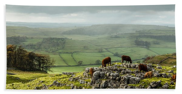 Cattle In The Yorkshire Dales Beach Towel