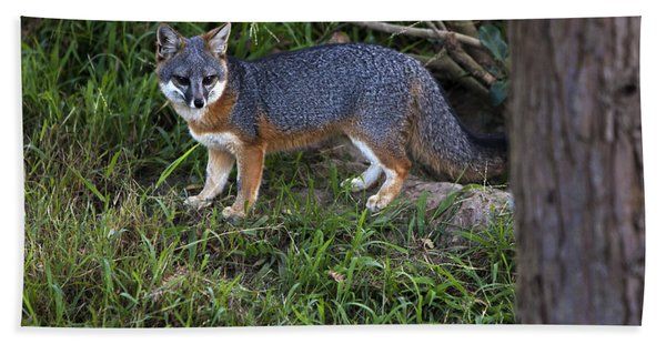 Beach Towel featuring the photograph Channel Island Fox by David Millenheft