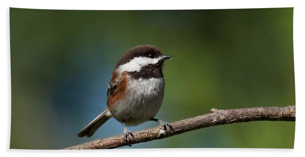 Chestnut Backed Chickadee Perched On A Branch Beach Sheet