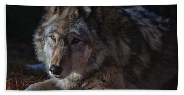 Colors Of A Wolf Beach Towel