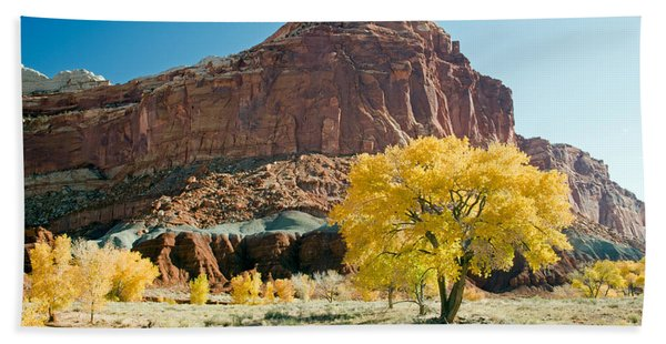 Cottonwoods In Fall The Castlecapitol Reef National Park Beach Towel