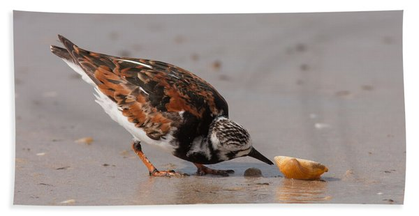 Curious Turnstone Beach Towel