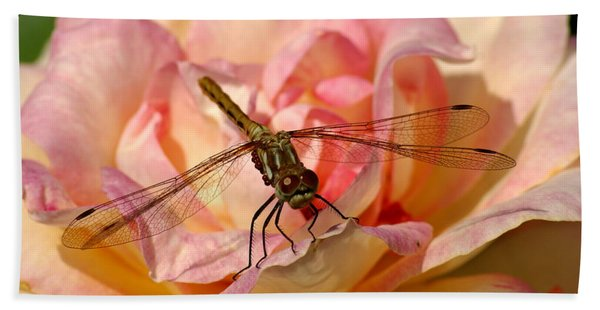 Dragonfly On A Rose Beach Towel