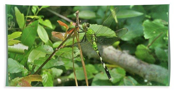 Eastern Pondhawk Female Dragonfly - Erythemis Simplicicollis - On Pine Needles Beach Towel