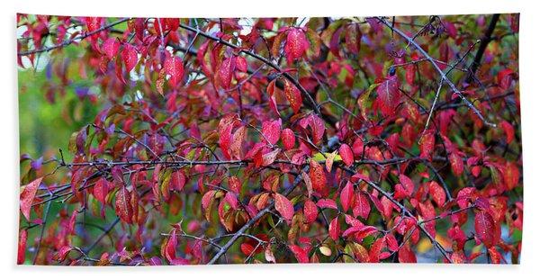 Fall Foliage Colors 05 Beach Towel