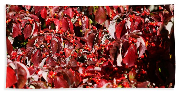 Fall Foliage Colors 08 Beach Towel