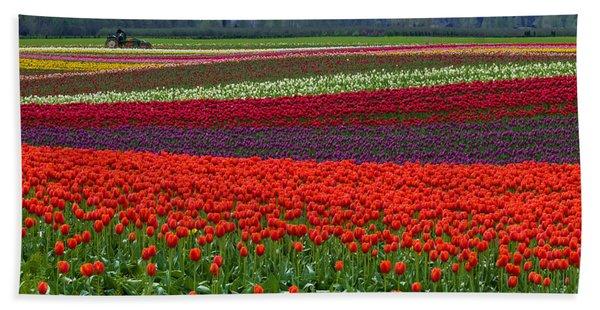 Field Of Tulips Beach Sheet