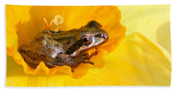 Frog And Daffodil Beach Towel