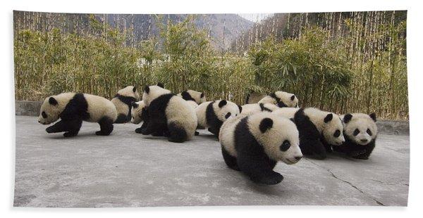 Giant Panda Cubs Wolong China Beach Towel