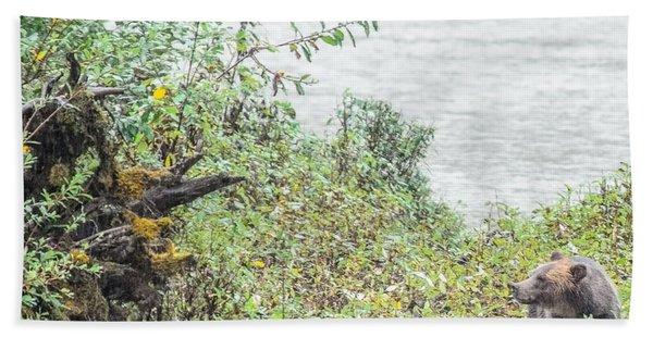 Grizzly Bear Late September 2 Beach Sheet