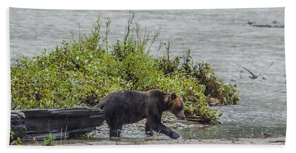 Grizzly Bear Late September 4 Beach Towel