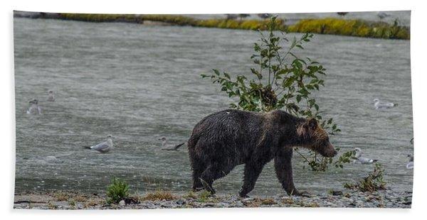 Grizzly Bear Late September 5 Beach Towel