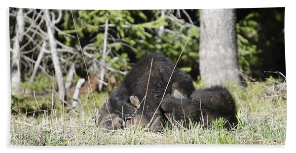 Grizzly Cubs Playing Beach Towel