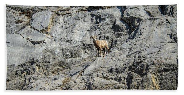 Big Horn Sheep Coming Down The Mountain  Beach Towel