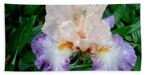 Irresistible Iris Beach Towel