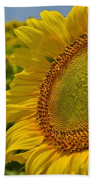 Beach Towel featuring the photograph Itsy Bitsy by Skip Hunt