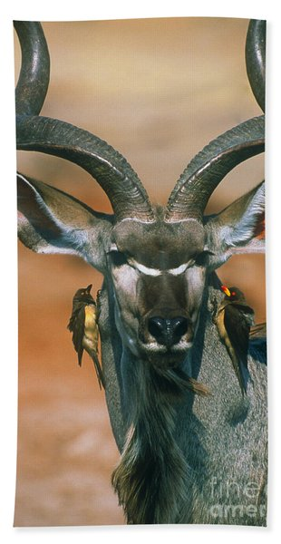 Kudu And Oxpeckers Beach Towel