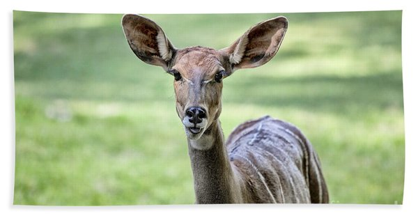 Lesser Kudu Beach Towel
